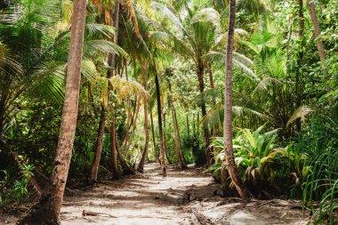 """Картина, постер, плакат, фотообои """"тропические джунгли с высокими зелеными пальмами фото"""", артикул 192524386"""