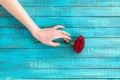 Fotografie ruka se dotýká růže