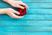 Fotografie ruce držící růže