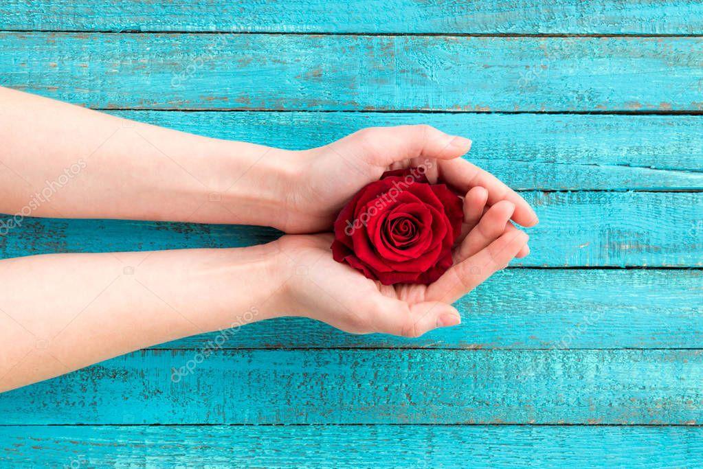 hands holding rose