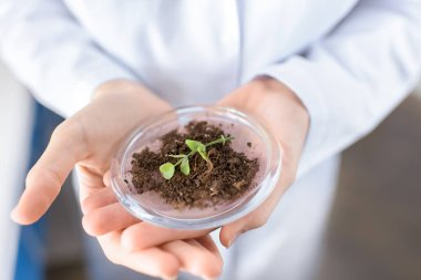scientist with plant in container