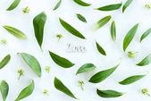 grüne Blätter und Liebessymbol