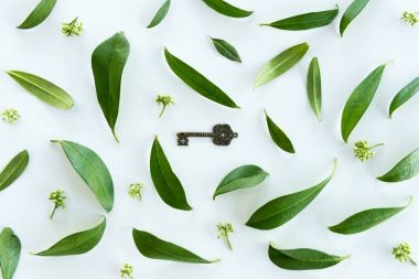 Green leaves and old key