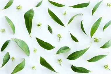 yeşil yapraklar arkaplan