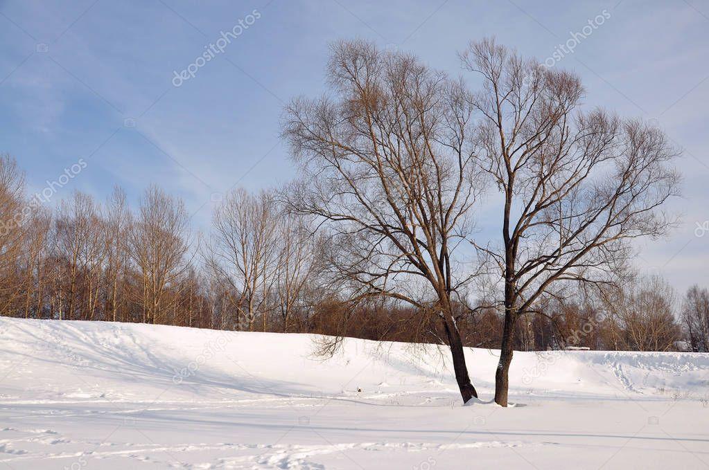 The winter park.