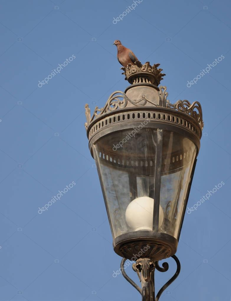 The bird is the pigeon sitting on a decorative lantern.