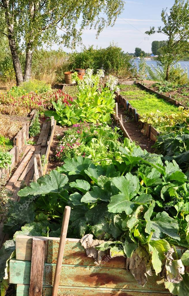 Vegetable patch in the garden near the river. Spring