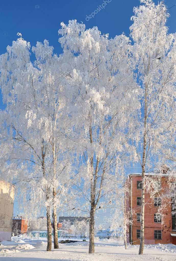 Trees with white frost in frosty weather. Winter