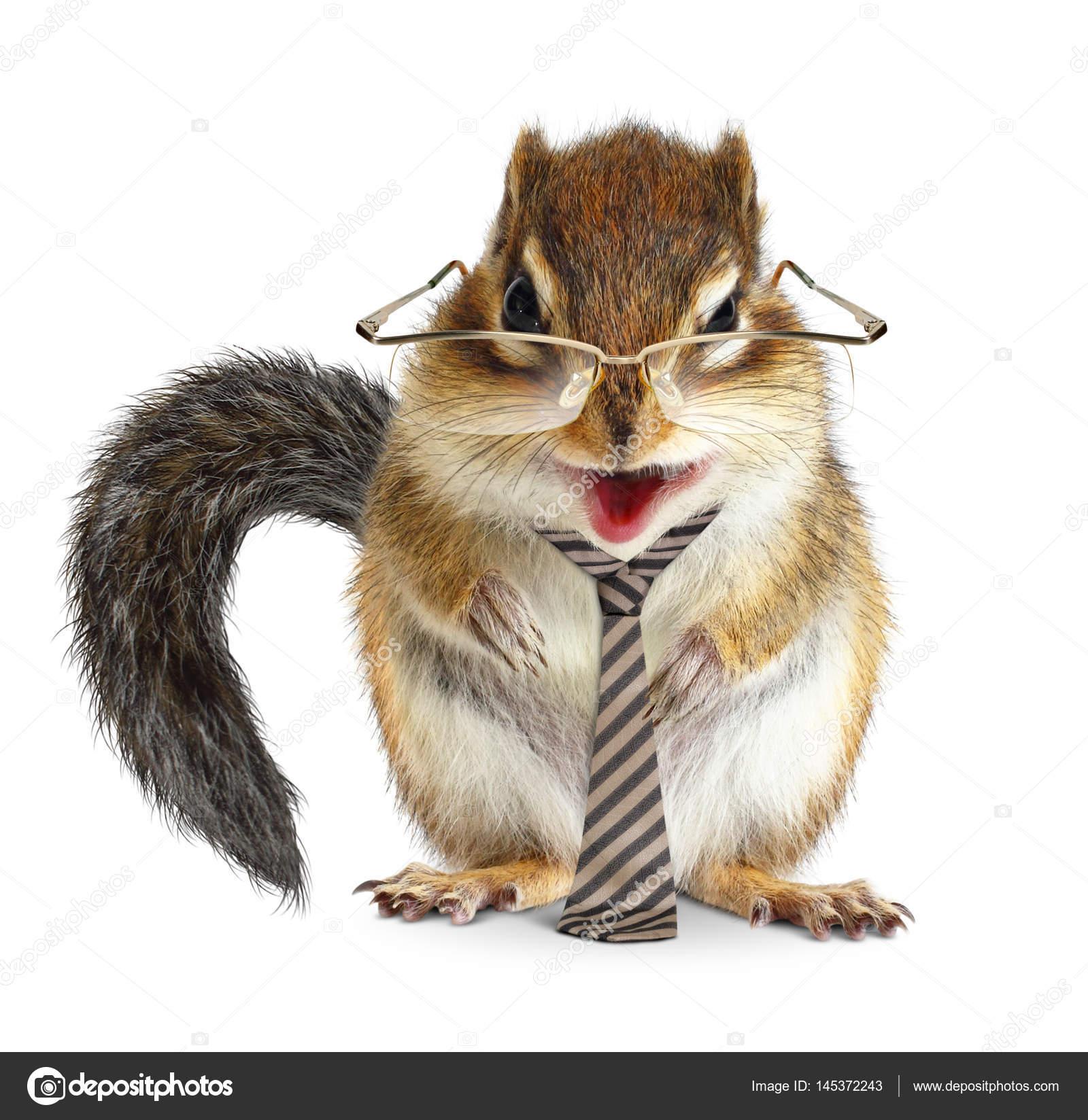 Extreem Grappige dieren zakenman, chipmunk met stropdas en glazen &LM95