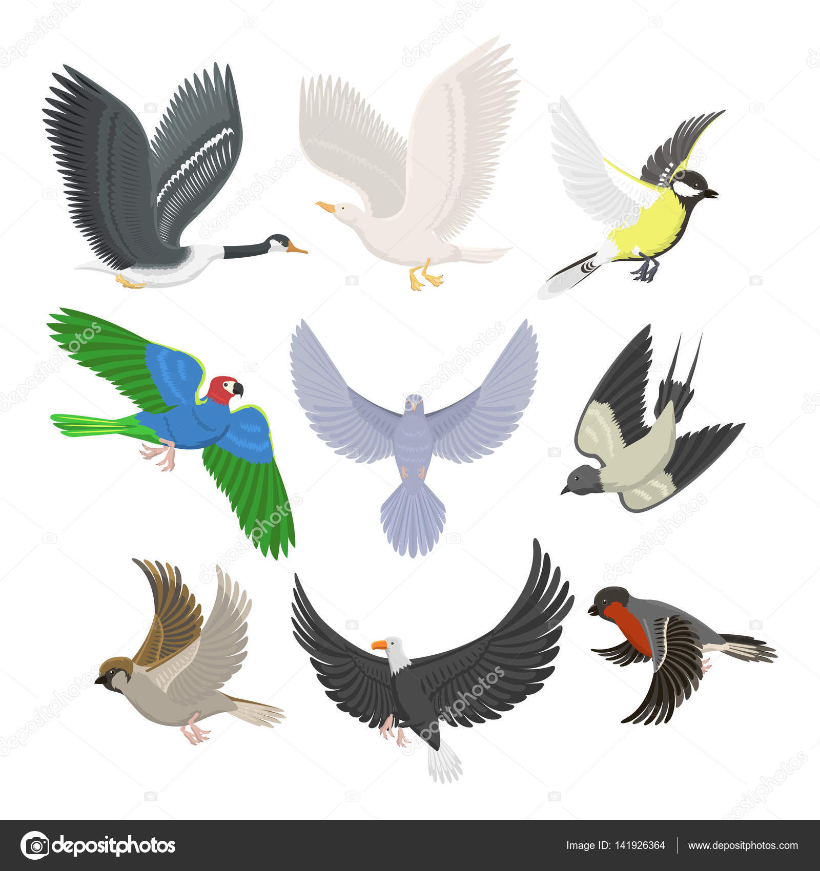 Set of sketches of flying swallows stock vector illustration - Set Of Different Flying Birds Vector Illustration Stock Vector 141926364