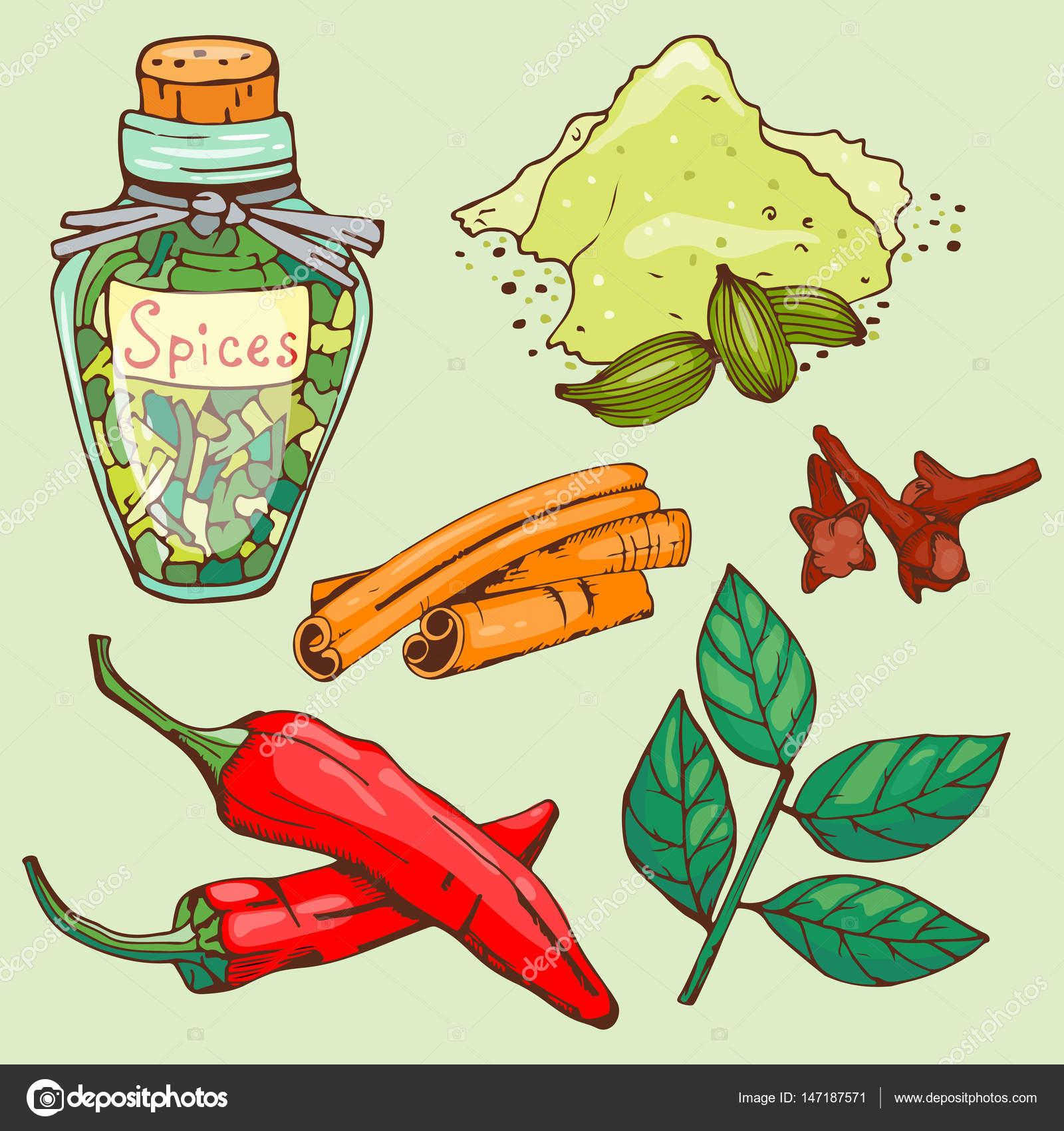 Especias condimentos dibujado a mano estilo comida hierbas semillas ...
