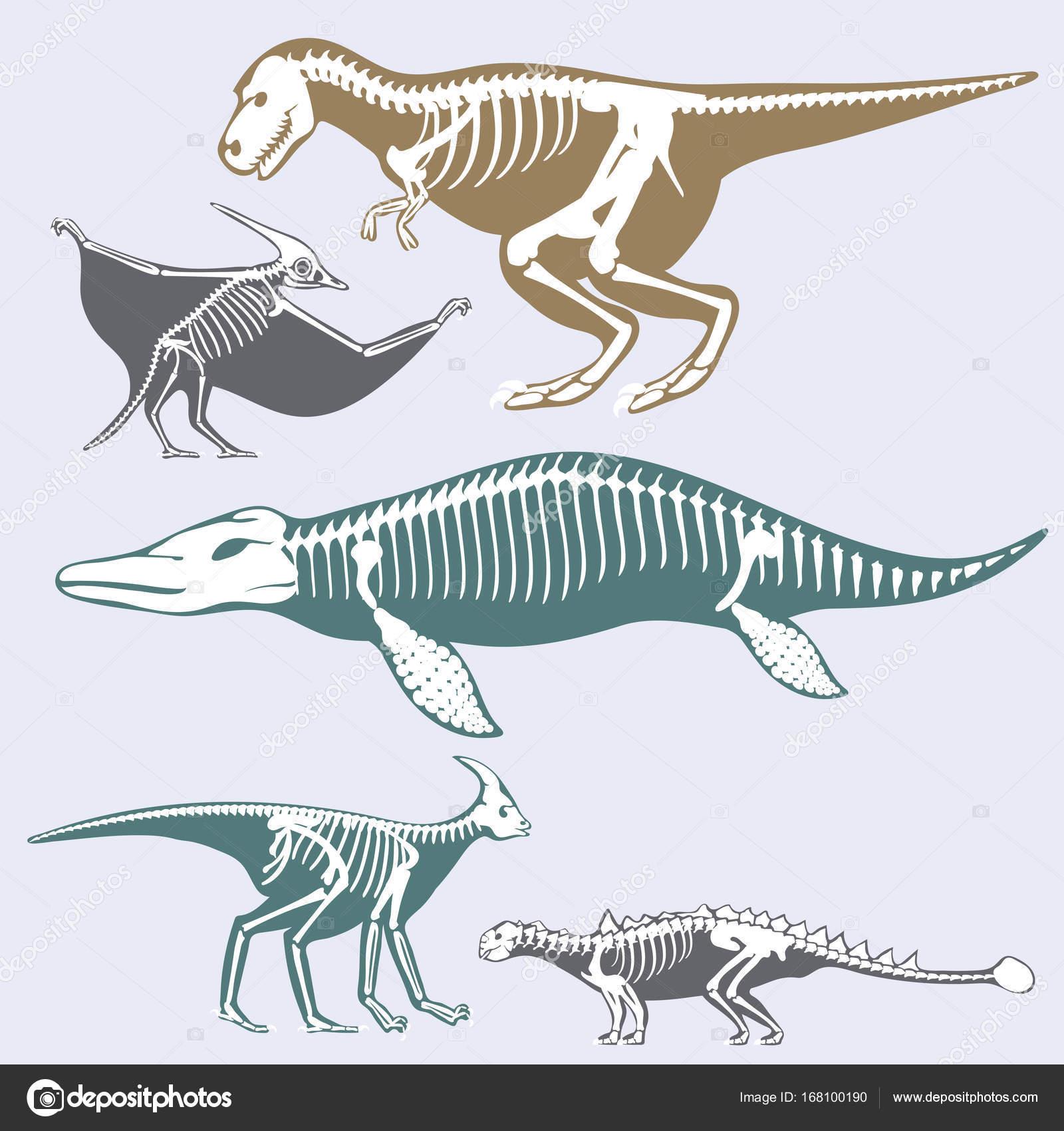 fosilních fosilních dinosaurů autentické seznamky v Austrálii