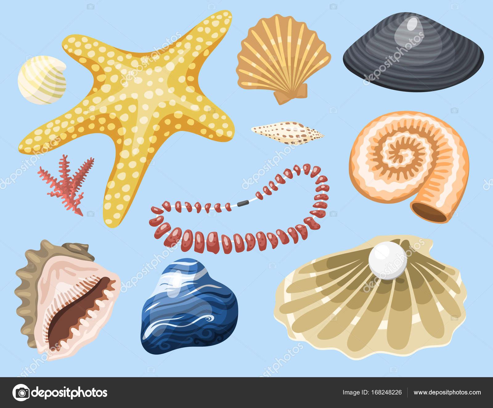 Caracol De Mar Dibujo Animado