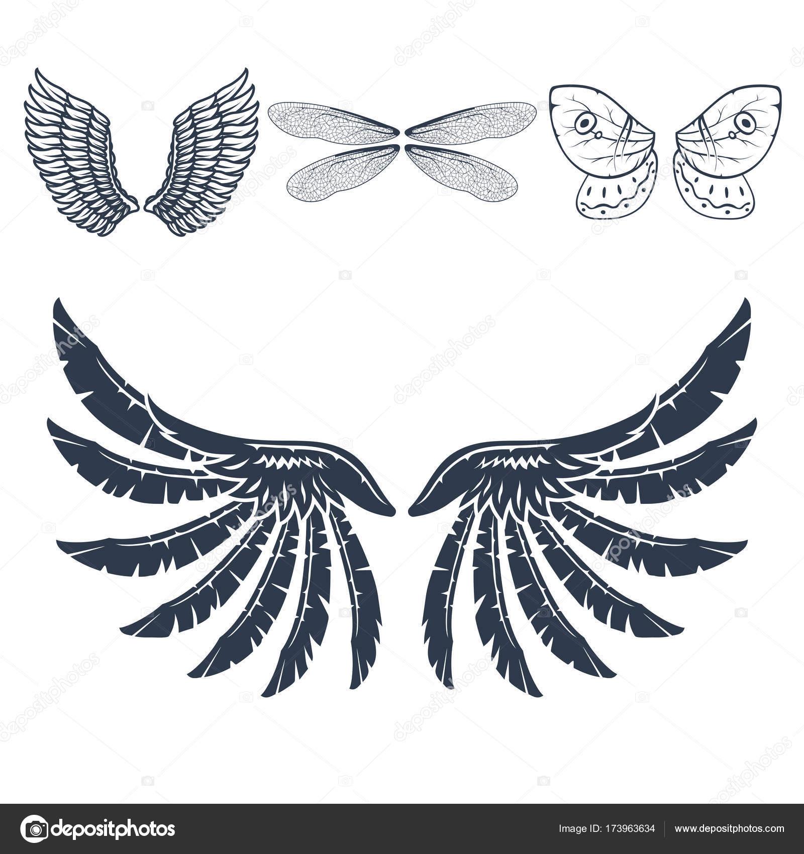 Flügel, die isoliert Tier Feder Ritzel Vogel Freiheit Flug ...