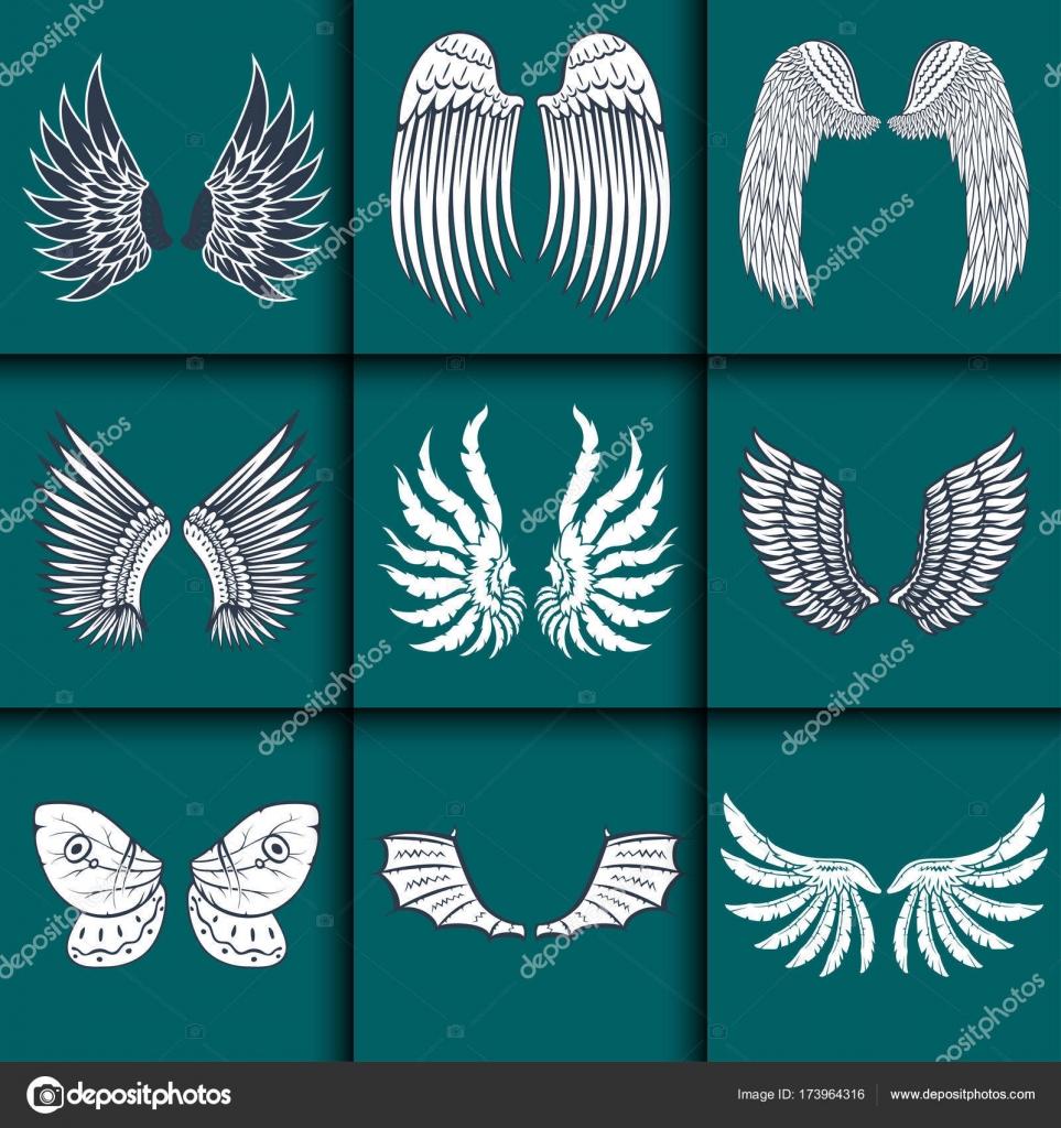 Aislado alas pluma animal piñón Ave libertad vuelo paz natural ...