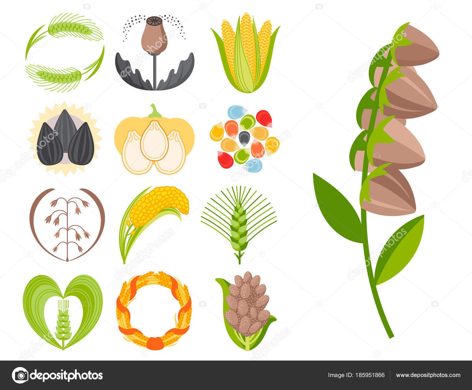 Cereales semillas grano producto insignia vector logo las plantillas ...
