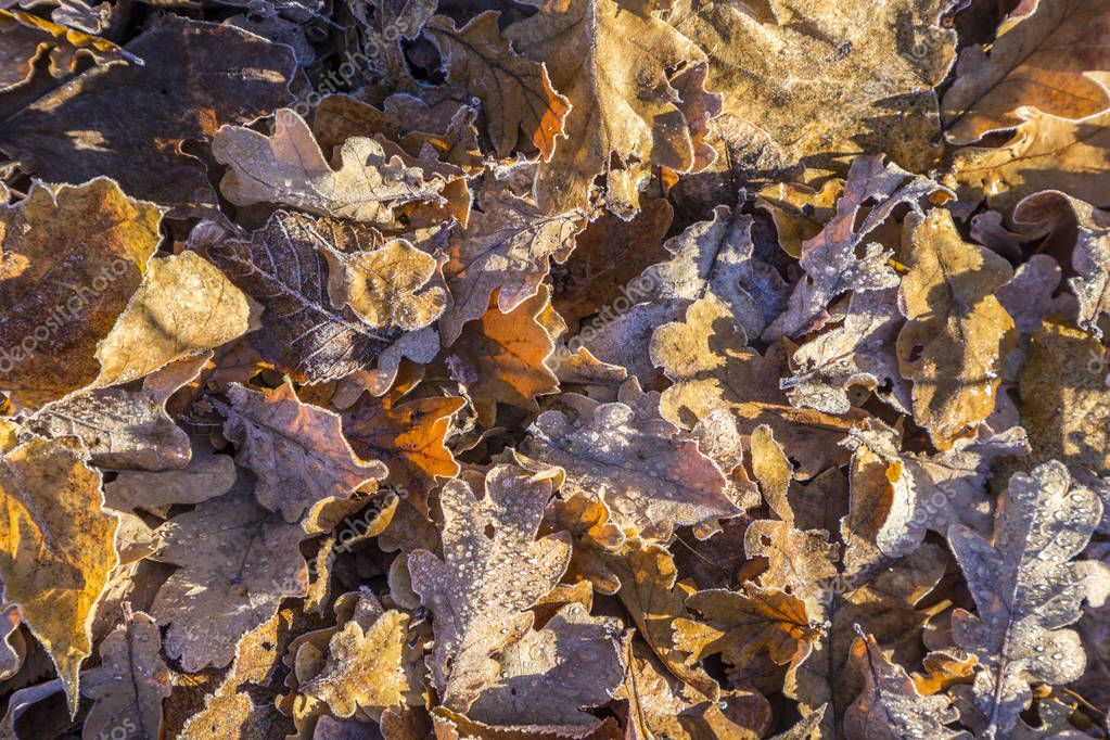 leaves at the earth in harmonic pattern