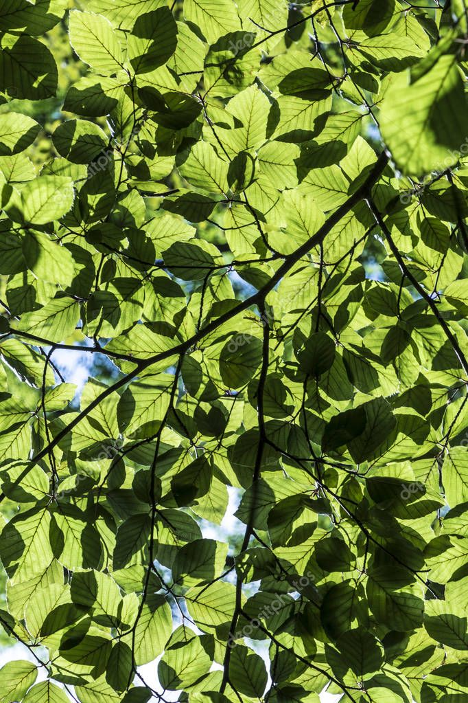 harmonic pattern of green leaves in detail