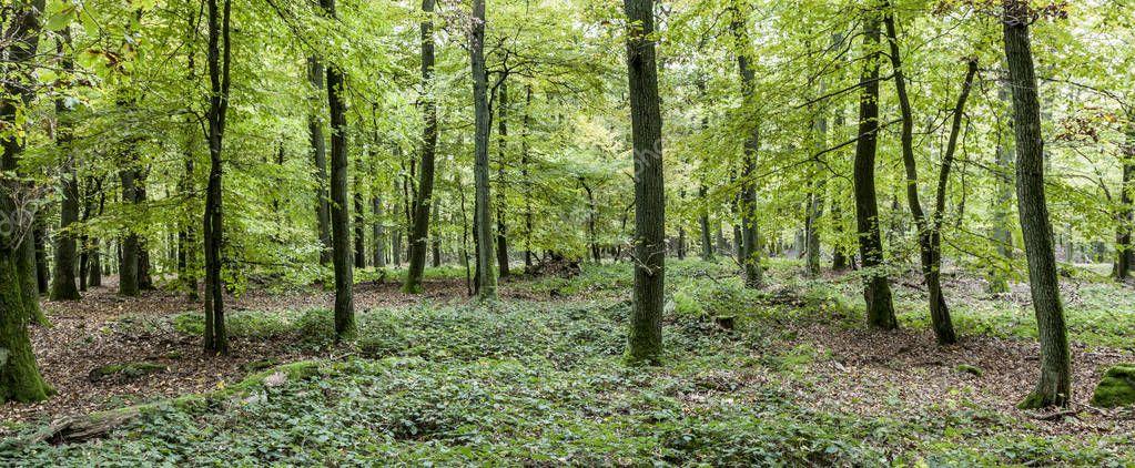 harmonic view of pattern of oak trees