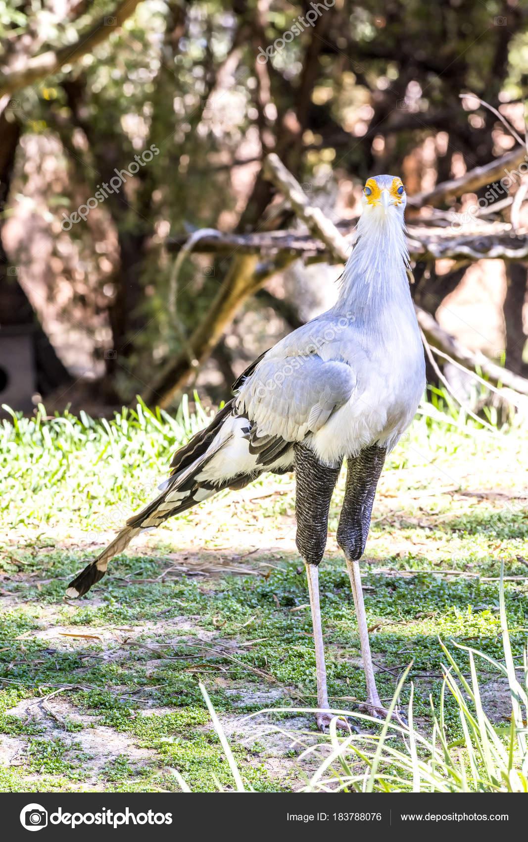 δωρεάν μεγάλο πουλί φωτογραφίες