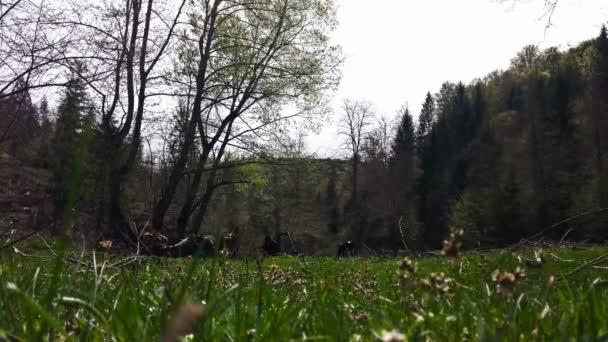 Muž výdeje kopřivy na zelené louce, malebná krajina s krávou na pozadí