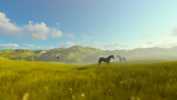 Dva koně na zelené louce, krásné ráno