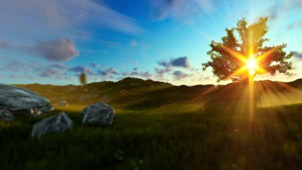 Chlapeček s letadlo hračka na zelené louce, strom života, krásné sluneční paprsky