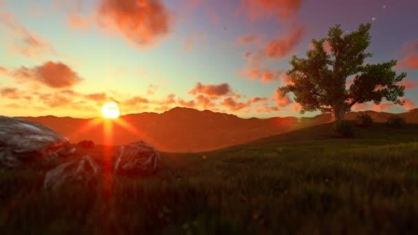 Chlapeček s letadlo hračka na zelené louce, strom života, krásný západ slunce