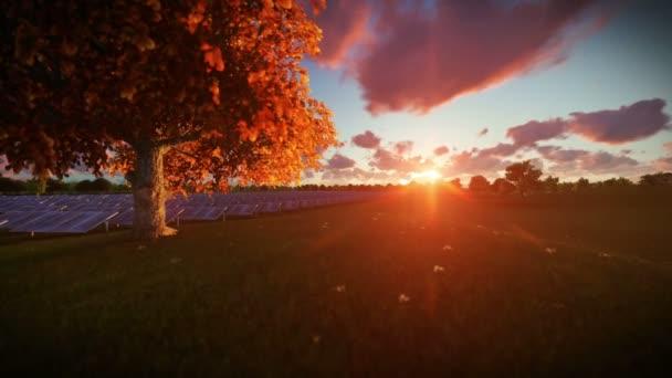 Solární panely a strom života, timelapse sunrise, naklonění