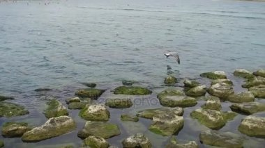 Seagull flying, slow motion