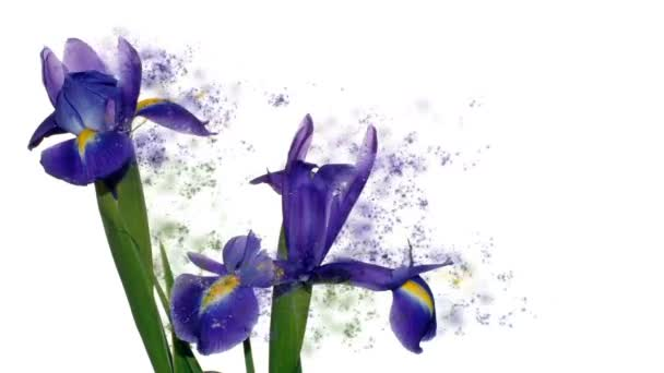 Iris flower against white, scent particles flying