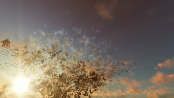 Květy magnólie proti krásný západ slunce, částice letící