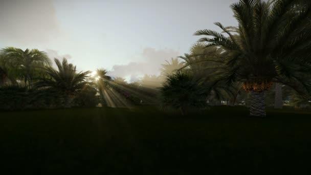 Palmové stromy proti vycházejícím sluncem