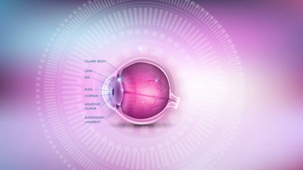 Normal Eye Anatomy With Description Abstract Background With