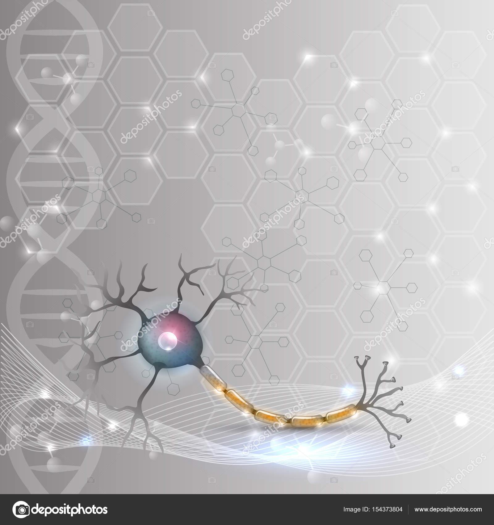 Neurona, neurona anatomía — Archivo Imágenes Vectoriales © megija ...