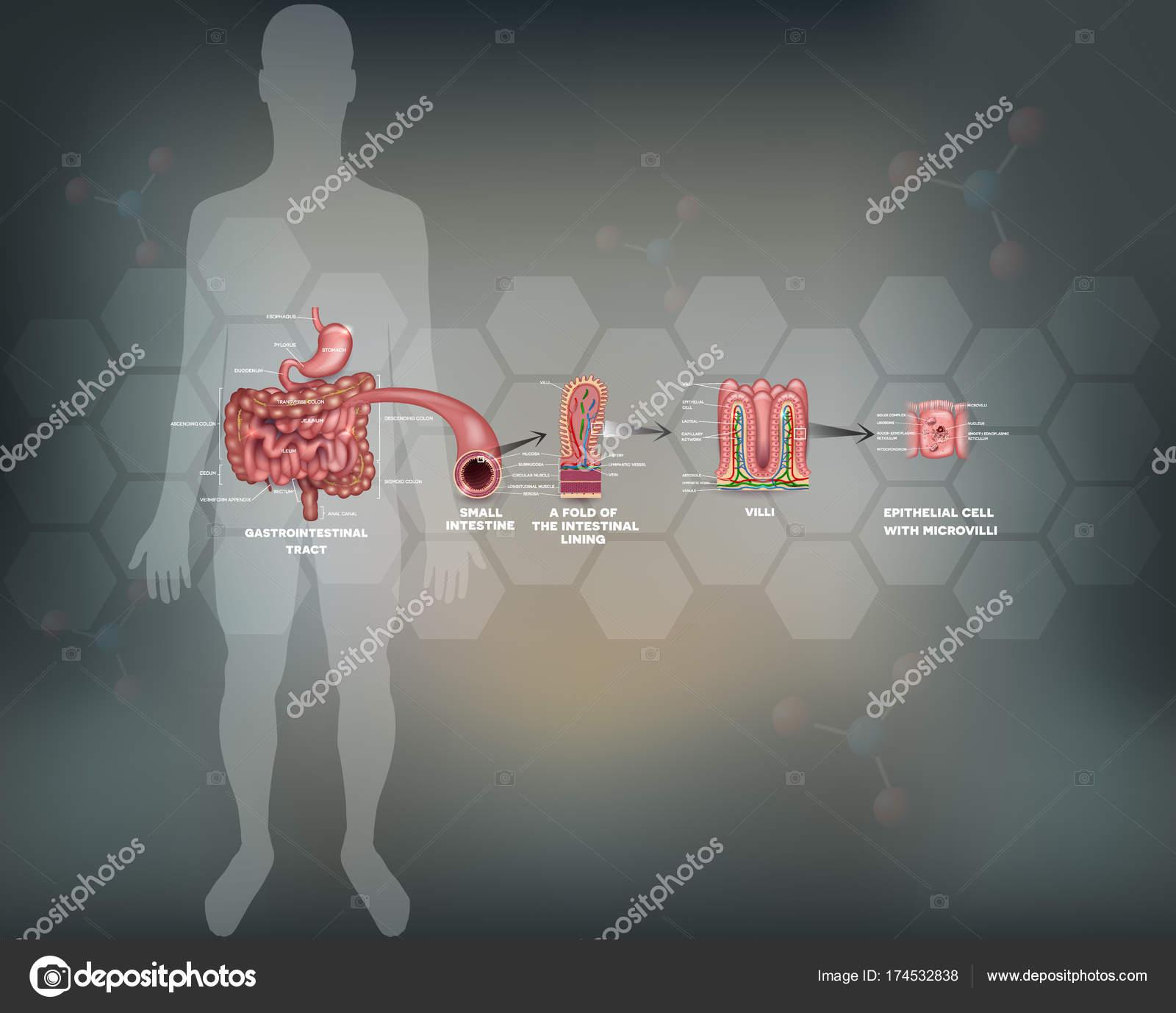 Atemberaubend Fallstudien In Anatomie Und Physiologie Fotos ...