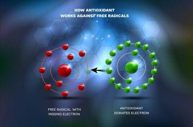 Antioxidant works against free radical