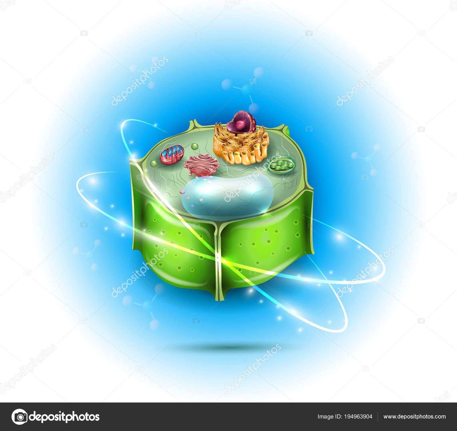 Imágenes Del Nucleo De La Celula Vegetal Estructura De La