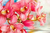 orchidej květina zblízka