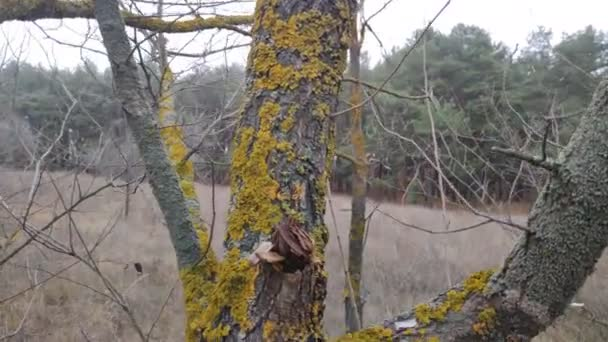 green moss on tree branches