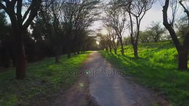 lesní stromy. létající koryto lesa. silueta stromy. sluneční erupce západ slunce. Příroda.