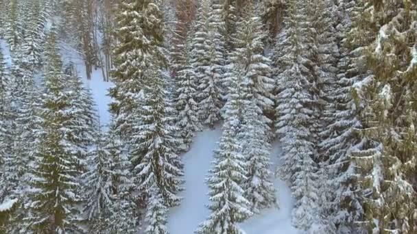Luftaufnahme der Bäume Wald Wald. Schnee Wintersaison. Wunderschöne Natur.