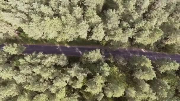 Letecký pohled na letící nad starý záplatované dva lane lesní cestu s pohybující se auto zelené stromy husté lesy rostoucí obě strany.