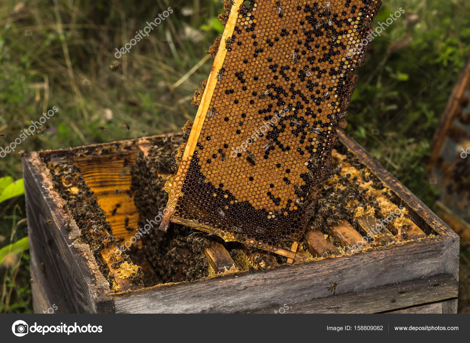 totalmente de nido de abeja de la miel de la colmena muy antigua ...