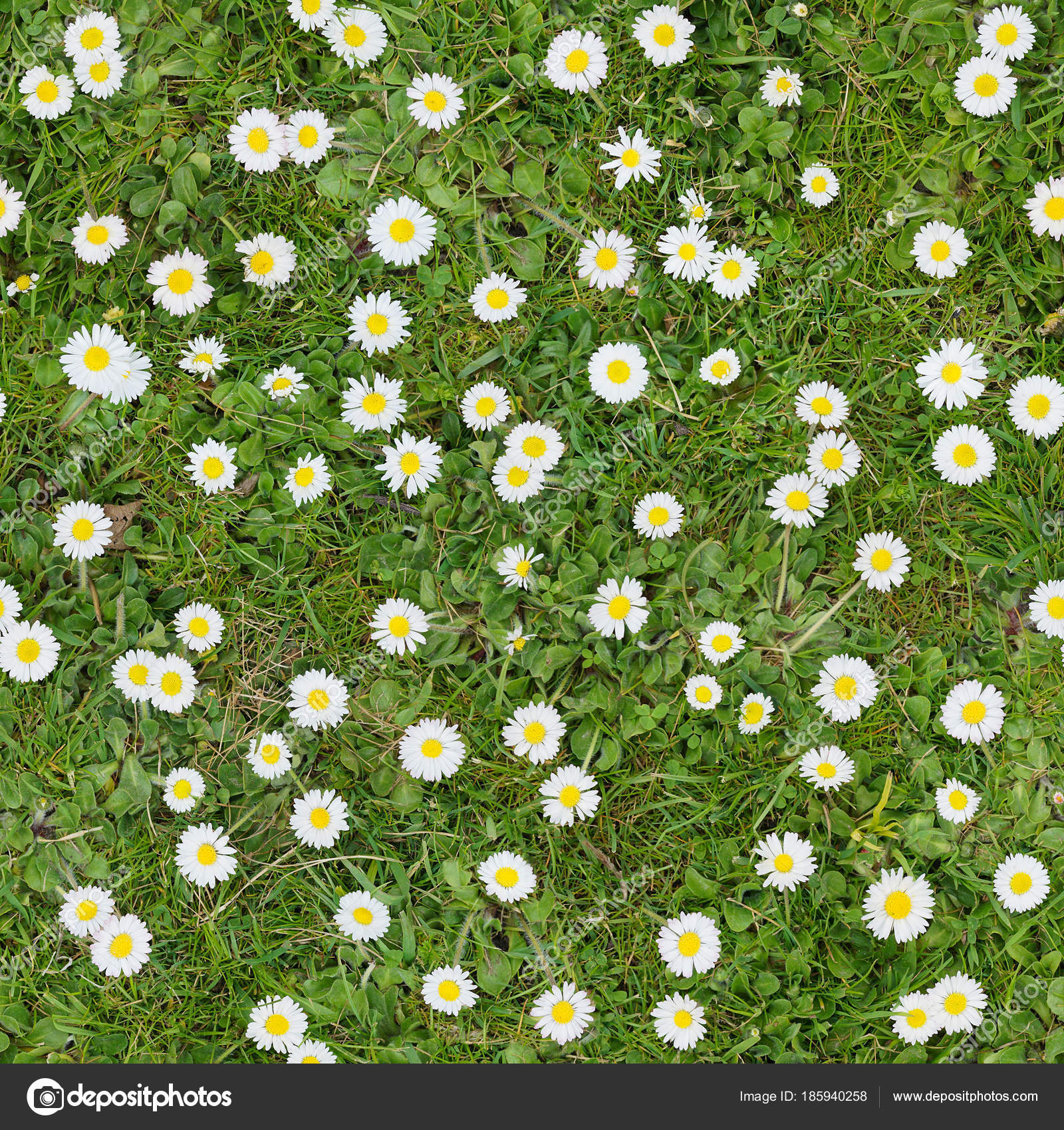 White Flowers On The Lawn Top View Seamless Texture Background