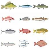 sada rozdíl druhů ryb