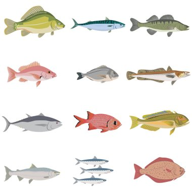 set of difference kinds of fish