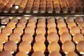 Fényképek Tojások csirke farm-csomag