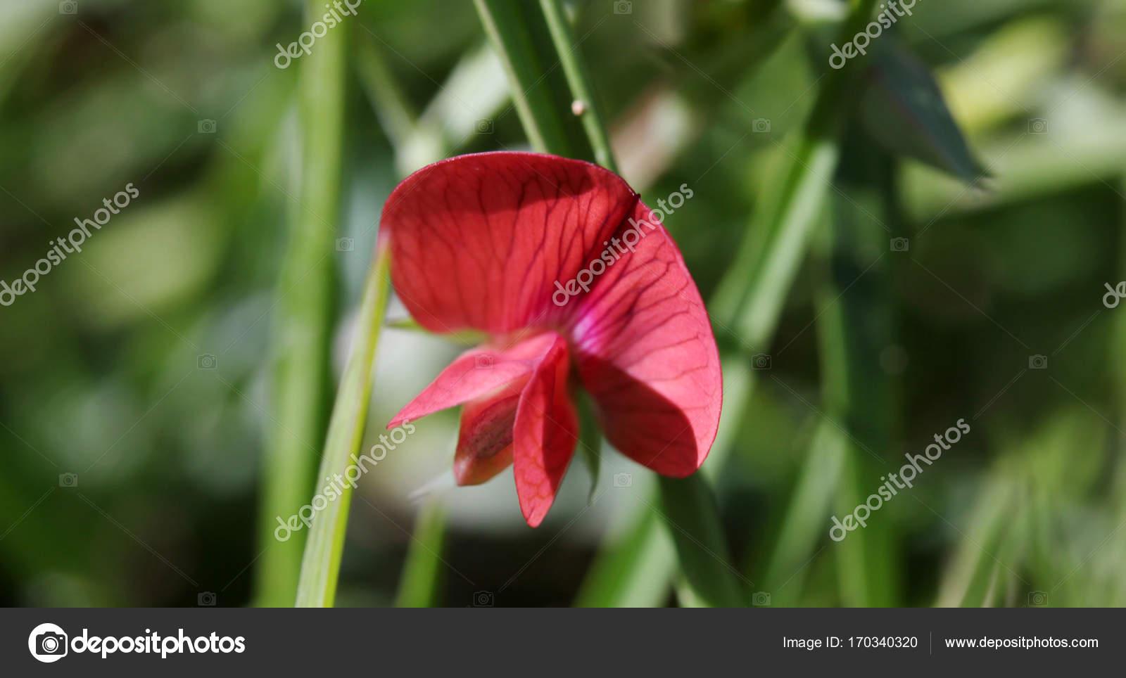 Wild Flowers In Beautiful Nature Stock Photo Reflexsafak 170340320