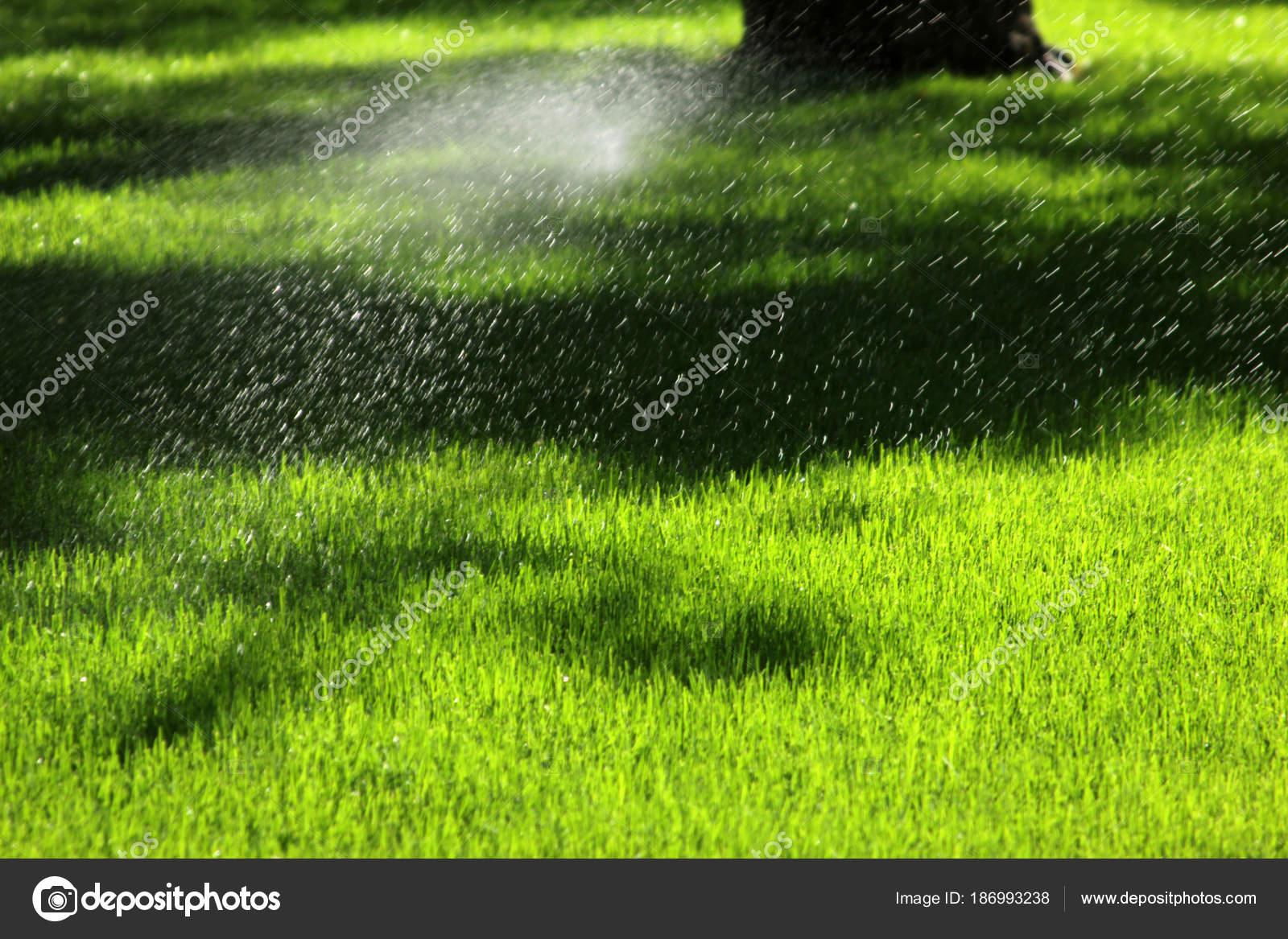 Sprinkler Der Automatische Bewasserung Stockfoto C Reflex Safak